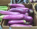 Neon eggplants