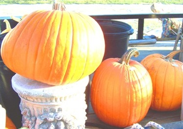 fall-pumpkins-at-sandhill-market.jpg