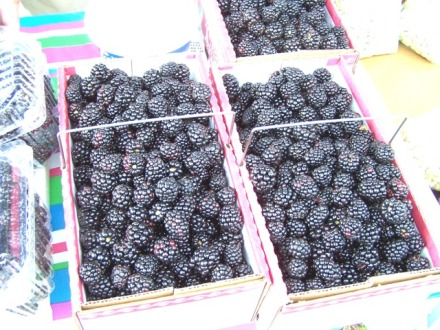 Hoefield Blackberries