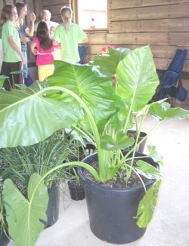 Plants raised by Jr. Master Gardeners