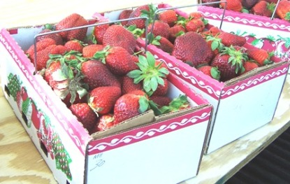 South Carolina Strawberries